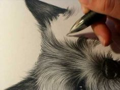 Drawing fur