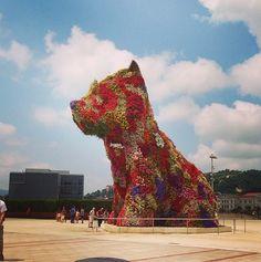 70 mil #flores, mas de 25 toneladas de solo regado compõem a #escultura de Jeff Koons no Museu de Guggenheim na #espanha. By: hbeg0917 #perfect #cachorro @Michelle Sadgrove @Alexis R Taylor