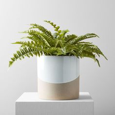 Fern Planters, Potted Ferns, Ceramic Planters, Potted Flowers, Plant Pots, Best Indoor Plants, Fake Plants, Artificial Plants, Outdoor Plants