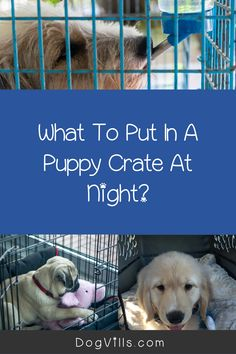"Are you wondering ""does my dog need a bed in his crate?    ""You might if you've just started crate training your dog and don't know what to put in your puppy's crate.    Fortunately, I've got all the answers you need on how to make your dog's crate more comfortable. Best Puppies, Best Dogs, Dogs And Puppies, Sleeping Too Much, Sleeping Dogs, Puppy Beds, Dog Beds, Crate Training, Training Your Dog"