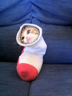 "Snug as a bug in a rug.... or should I say ""a cat in a sock""!"