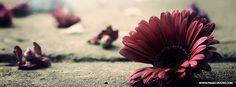 Missing Petals Daisy Facebook Cover