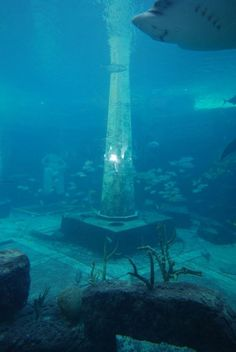 Atlantis: the lost city, or a city lost? Ancient Mysteries, Ancient Ruins, Ancient History, Sunken City, Underwater City, Underwater Photos, Mysterious Places, Lost City, Underwater Photography