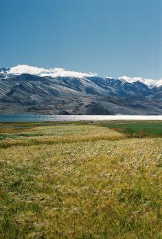 Tso Moriri  Leh, Ladakh, Jammu & Kashmir, India