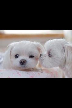 puppy kisses :P