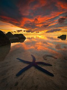 Blue starfish - Aitutaki Atoll in Cook Islands, South Pacific Ocean