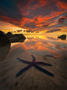 Blue starfish - Aitutaki Atoll in Cook Islands, South Pacific Ocean