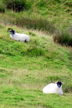 I love the beautiful sheep on the hills of Ireland!