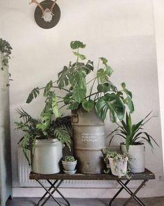 Planten, plantentafeltje
