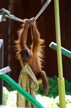 Playtime For Baby Orang Utang by GPNaturePhotos on Etsy, $45.00