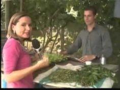 DIcas de produção de hortaliças e aprenda a fazer inseticida natural de ...