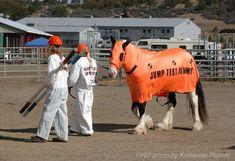 horse costumes for horses | few random photos of Aragorn: