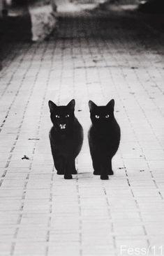 i love black kitties