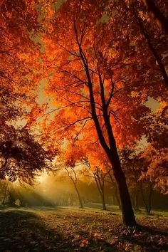 Nature's Splendid Fall Colours
