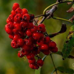 Bokeh in the forest.  #uwn_holland  #super_holland  #wonderful_holland  #instanetherlands  #holland_photolovers  #dutch_connextion  #ig_discover_holland  #global_hotshotz  #allbeauty_addiction  #aangenaambergenopzoom  #igworldglobal  #big_shotz  #theworldshotz  #ig_world_colors  #heart_imprint  #gottolove_this  #worldbestgram  #fotocatchers  #fotofanatics_nature_  #nature_of_our_world  #fiftyshades_of_nature  #pocket_trees  #bd_trees  #tree_magic  #tree_brilliance  #discovernaturee…