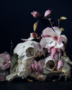 both the skull and the flowers are white making them comparable to the eye. And hence linking them together Elf Rogue, Yennefer Of Vengerberg, Animal Bones, After Life, Foto Art, Vanitas, Losing A Dog, Animal Skulls, Animal Skull Drawing