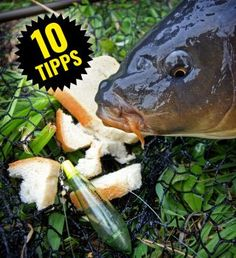 Tipps zum Angeln mit Schwimmbrot | Tips for surface fishing with bread