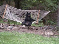 Lazy canadians.