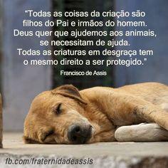 os animais não precisam falar, porque o AMOR dispensa palavras.