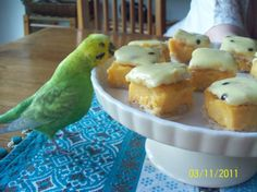Budgie trying to eat some cake. Lol.