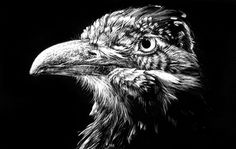 Image detail for -Bird on scratch board by ~illogoi on deviantART