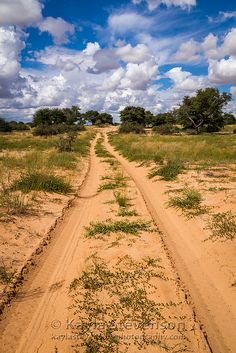 Sand Track, Kgalagadi Transfrontier Park, southern Africa (South Africa and Botswana border)