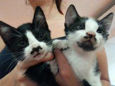 Gatos con bigote