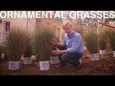 Ornamental Grasses   The Garden Home Challenge With P. Allen Smith