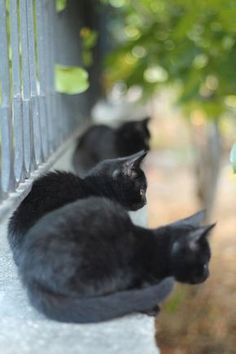 ❤️❤️❤️ LOVE BLACK CATS ❤️❤️❤️