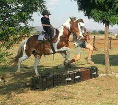 Jump Lulu Horses, Animals, Animales, Animaux, Horse, Animal Memes, Animal, Animais, Dieren
