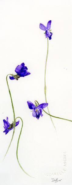 La Viola odorata, una mia passione