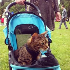 You ride around in a stroller. | 24 Signs Your Person Thinks You're Human