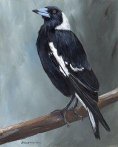 Australian Magpie by Janet Graham. Paintings for Sale. Crow Art, Raven Art, Bird Art, Animal Paintings, Paintings For Sale, Bird Paintings, Mother Daughter Tattoos, Mother Daughters, Magpie Tattoo