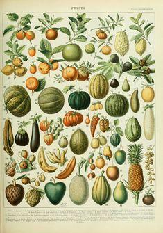 https://upload.wikimedia.org/wikipedia/commons/6/65/Adolphe_Millot_fruits_B.jpg