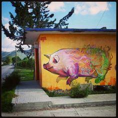 FARID RUEDA   El animal que no llega a viejo... Valle del mezquital, hidalgo. #streetartmexico