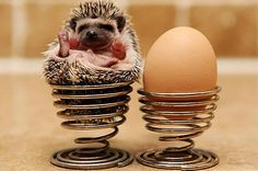 What are you doing ina an egg cup! Silly!