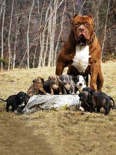 Looks like a protecting mother don't mess with her pups.