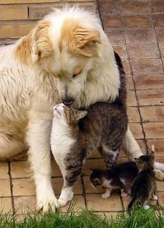 Love cats and dogs ? cats cats - Cats and kittens - cute kitten - baby cat - beautiful cats - cat too cute # shop - Sandrine Brenière - Animal Cute Cats And Dogs, Animals And Pets, Cats And Kittens, Funny Animals, Cute Animals, Adorable Dogs, Funny Cats, Springer Puppies, Unlikely Animal Friends