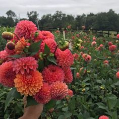 Intimate hands-on flower farming & design workshop - examines what it takes to build a successful flower farm & farmer florist business - all levels welcome. Growing Flowers, Cut Flowers, Flower Farmer, Permaculture Design, Planting Seeds, Color Theory, Natural World, Dahlia, Floral Design