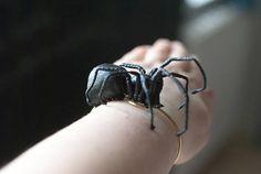 black spider bracelet fiberart soft sculpture Bracelet Making, Jewelry Making, Heart Anatomy, Ernst Haeckel, Black Spider, Human Heart, Textiles, Amazing Spider, Soft Sculpture