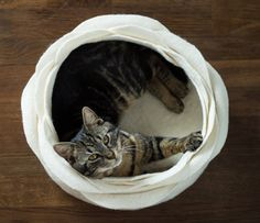 My cats would LOVE this....Cat bed/cat house/cat cave/white flower felted cat bed by elevele, $77.00
