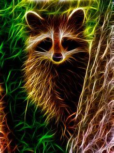 Картинки енота – фракталы | Вдохновение жизни