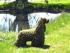 Topiary Cocker Spaniel stands alert sensing approach of topiary squirrels.