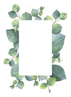 Watercolor green floral card with silver dollar eucalyptus leaves and branches isolated on white background. Illustration about herbal, decoration, green, eucalyptus - 86565807