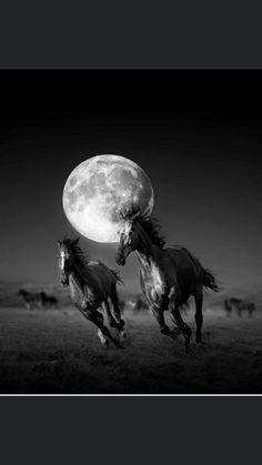 Horses Moon Spirit Animal Wilderness Outdoors Nature Juniors V-neck T-shirt