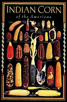 http://plantingmilkwood.files.wordpress.com/2012/05/1205-indian-corn-08.jpg