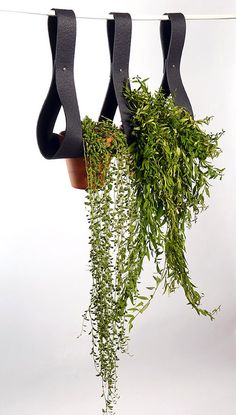 If you like your garden hanging around, these soft adjustable fold-over straps are wonderful assistants in the creation of a green wall.   #planters #greenwalls