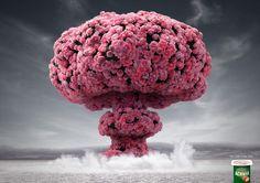 Flower bomb   Danone   Y&R