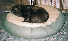 Merlin, a Black Labrador fast asleep on his comfy dog bed Comfy Dog Bed, Labradors, Black Labrador, Large Dogs, Merlin, Pictures, Animals, Animais, Black Labs