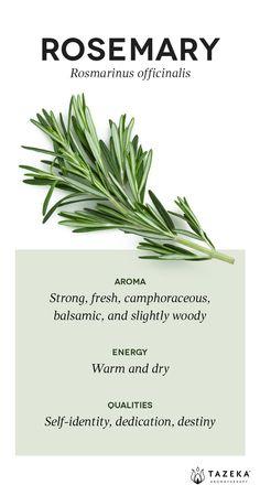 Rosemary Profile | (Source: Aromatherapy For the Healing Spirit - Gabrial Mojay) #Tazeka